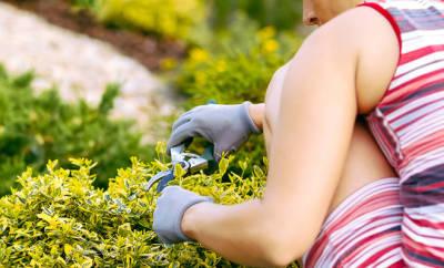 Kreuzschmerzen vermeiden im Alltag? Eine Frau arbeitet im Garten. Sie beschneidet kniend eine Buchshecke.