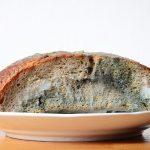 Brotlaib auf Teller mit Schimmel