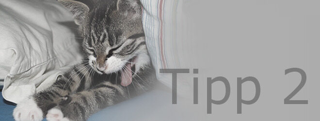 Tipps gegen Kater