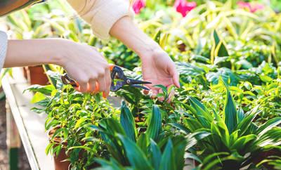 Gartenarbeit ist gesund - wenn man Knie und Rücken dabei schont