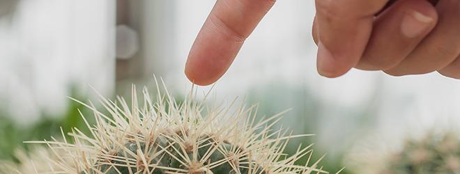 Schon ein kleiner Stich am Kaktusstachel kann Bakterien den Weg in den Körper ebnen