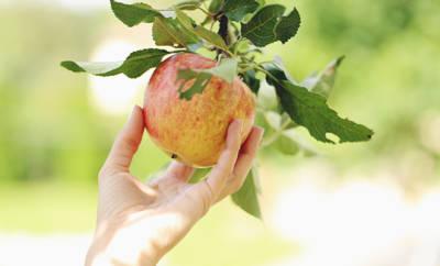 Wir verraten, was Äpfel gesund macht.
