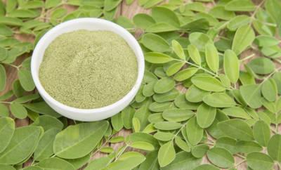 Moringa-Baum: Blätter und Pulver