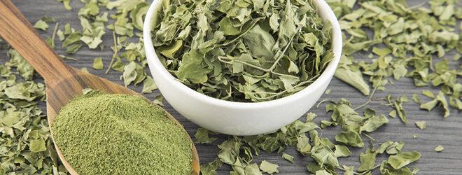 getrockene und gemahlene Moringa-Blätter