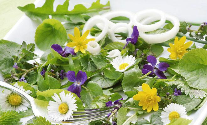 Wildkräuter als Salat