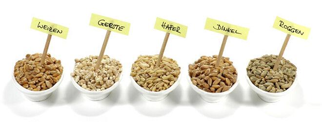 Verschiedene Glutenhaltige Getreidesorten in Porzelanschälchen