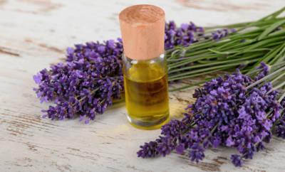 Lavendel wird als Heilpflanze unter anderem bei Schlafstörungen und Angstzuständen eingesetzt.