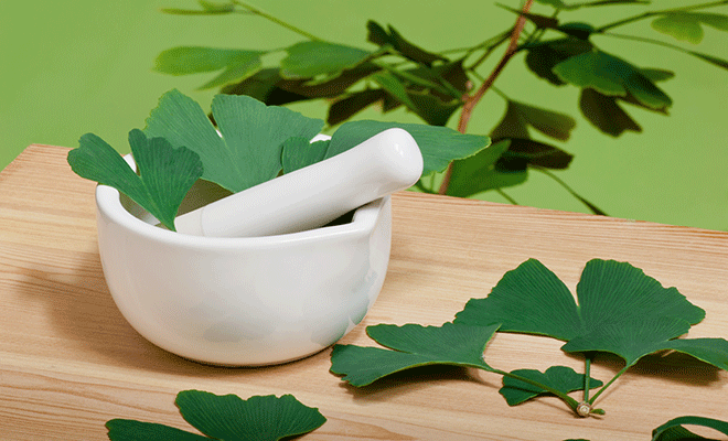 In den Blättern des Ginkgo finden sich allerlei Wirkstoffe.