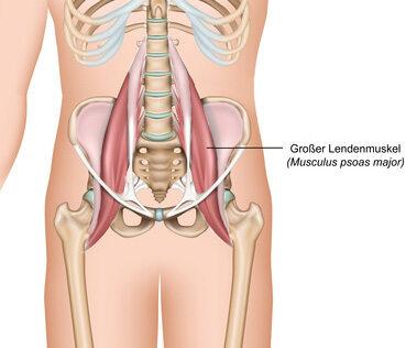 Der große Lendenmuskel ist der größte Hüftbeuger-Muskel.