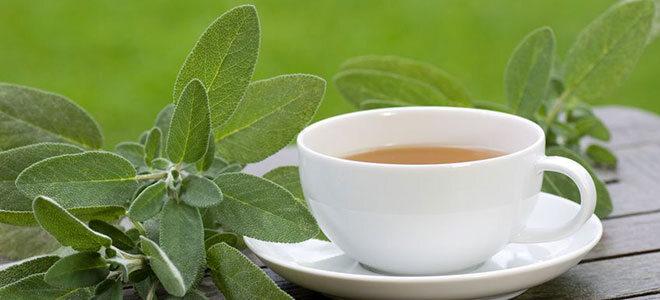 Ein Tasse Salbeitee mit Salbei dekoriert.