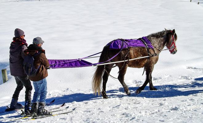 Skijöring: Ein Wintersport perfekt für Natur-, Pferde- und Skiliebbhaber.