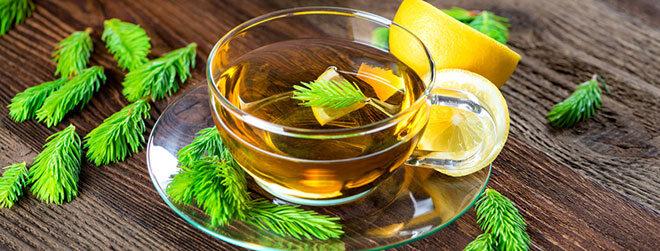 Fichtennadeltee in Tasse schön angerichtet mit Nadeln und Zitrone.