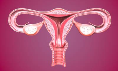 Bei einer Eileiterschwangerschaft nistet sich das befruchtete Ei nicht in der Gebärmutter ein, sondern im Eileiter.