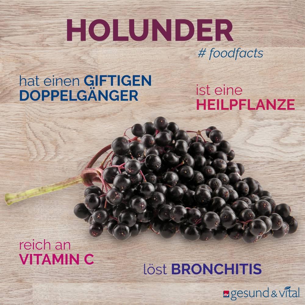 Eine Grafik mit verschiedenen Fakten zum Holunder. Sie zeigt Wissenswertes über die Inhaltsstoffe der Beere.