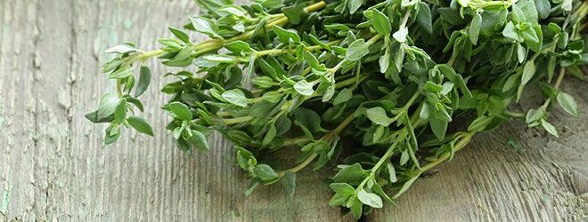 Thymian ist eine wirksame Heilpflanze bei Husten.