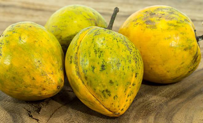Lucuma Früchte auf Holzhintergrund.