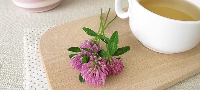 Rotklee Tee mit einer Blüte daneben.