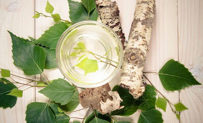 Birkenholz und Blätter