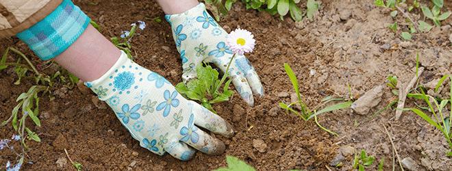 Gesund durch die Beschäftigung mit Pflanzen.