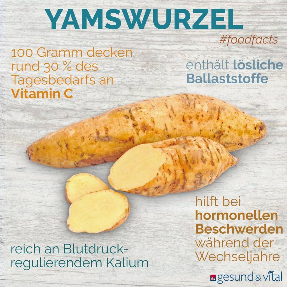 Eine Grafik mit verschiedenen Fakten zur Yamswurzel. Sie zeigt Wissenswertes über die gesunden Inhaltsstoffe und Wirkungsbereiche der Wurzel.