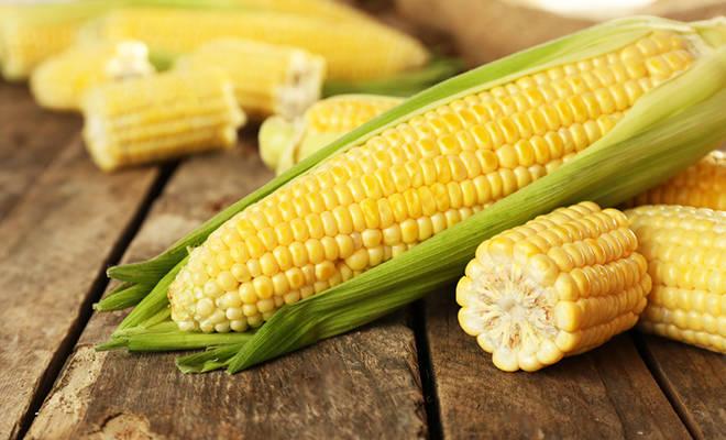 Frische Maiskolben auf Holzhintergrund