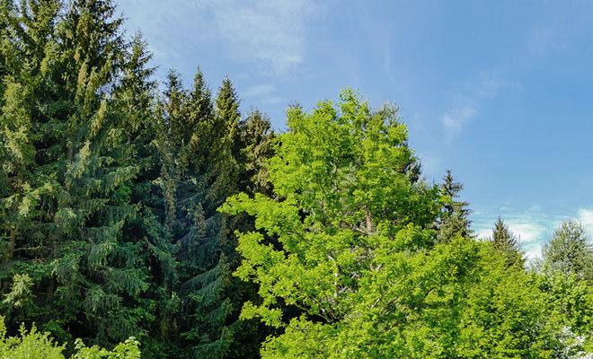 Verschiedene Bäume