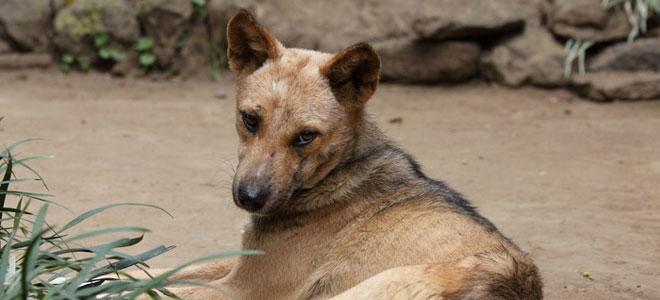 Ein Mischlingshund, der auf Sandboden liegt.