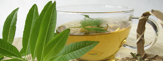 Aus den Blättern lässt sich Tee zubereiten.