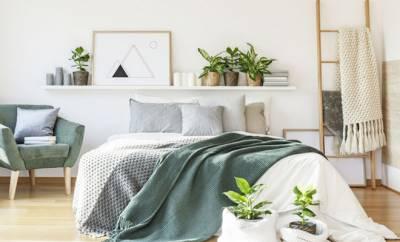 Mehrere sauerstoffspendende Pflanzen im Schlafzimmer.