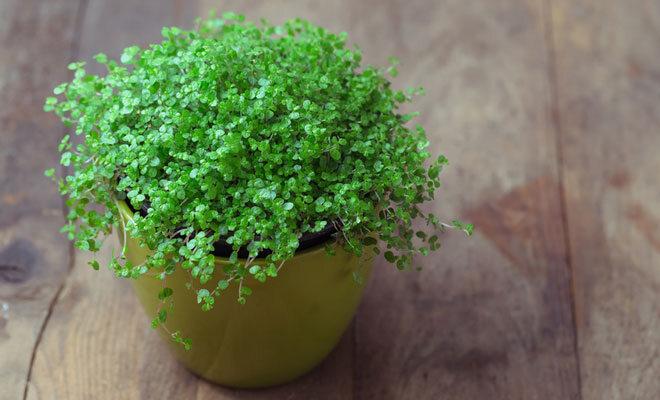 Pflanzen im Schlafzimmer: Die 5 besten Lufterfrischer für ...