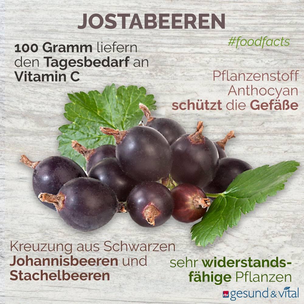 Eine Grafik mit verschiedenen Fakten zu Jostabeeren. Sie zeigt Wissenswertes über die gesunden Inhaltsstoffe und die Wirkung der Frucht.