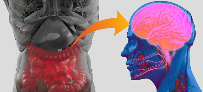 eine grafische Darstellung der Darm-Hirn-Achse. So scheinen Darmflora und Depressionen in Verbindung zu stehen.