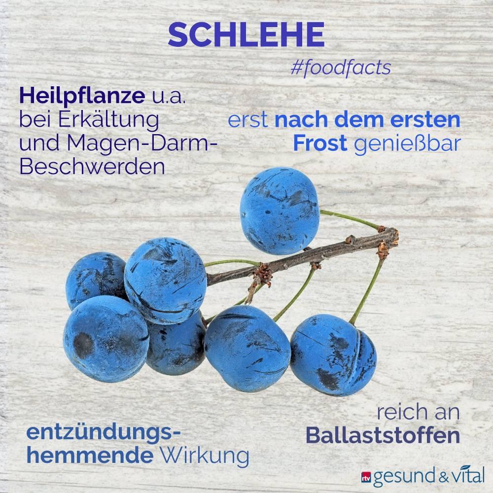 Eine Infografik mit verschiedenen Fakten zur Schlehe. Sie zeigt Wissenswertes über die Inhaltsstoffe und Wirkung der Beere.