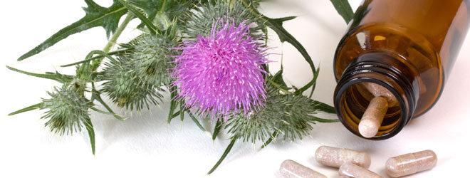Kapseln aus Mariendistelextrakten sind natürliche Nahrungsergänzungsmittel für die Verdauung