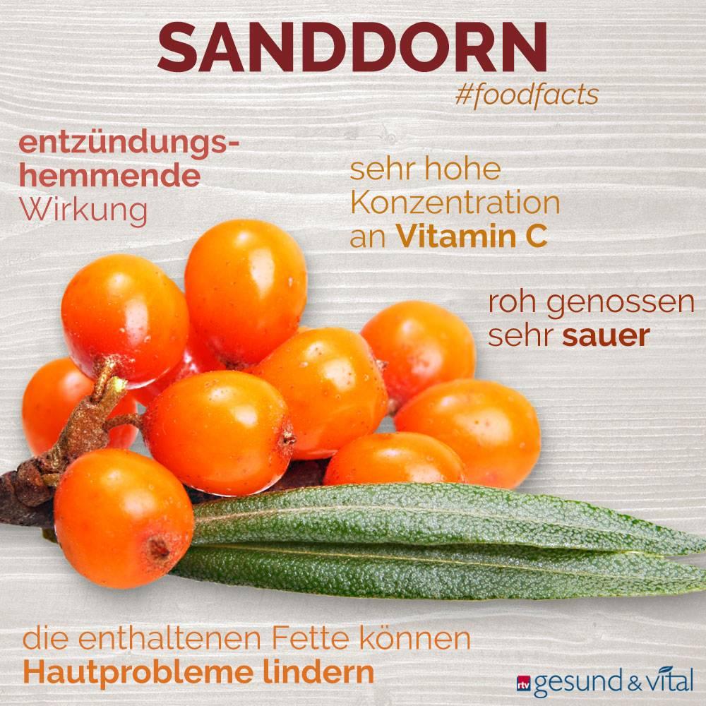 Eine Infografik mit verschiedenen Fakten zu Sanddorn. Sie zeigt Wissenswertes über die Inhaltsstoffe und Wirkung der Beeren.