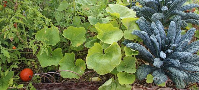 Gemüsegarten nach dem Prinzip der landwirtschaftlichen Biodynamik