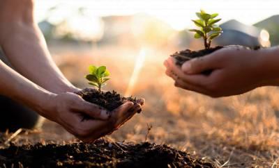 zwei Personen pflanzen Setzlinge in die Erde