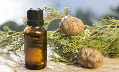 Zweige der Zypresse und ätherisches Zypressenöl