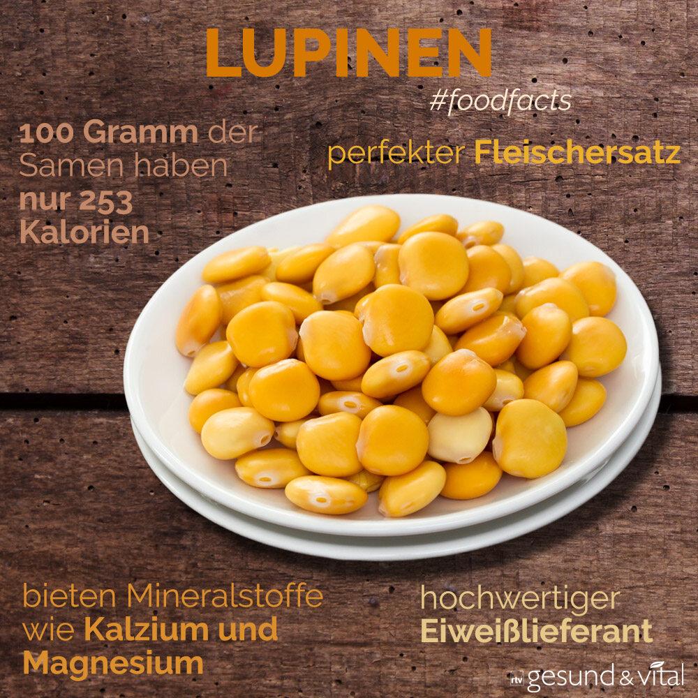 Eine Infografik mit verschiedenen Fakten zu Lupinen. Sie zeigt u.a. Wissenswertes über die Inhaltsstoffe von Lupinen.
