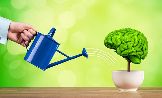 Symbolbild für das Belohnungssystem des Gehirns