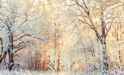 Ein verschneiter Winterwald in gelbem Sonnenlicht